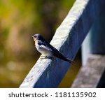 a dainty delightful  little... | Shutterstock . vector #1181135902