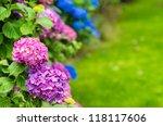 Stock photo hydrangeas garden 118117606