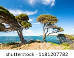 trees and and rocky coastline... | Shutterstock . vector #1181207782