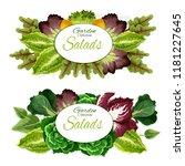 green leaves vegetables and...   Shutterstock .eps vector #1181227645