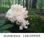 The Coral Fungus Grows On The...