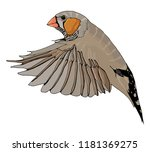 hand drawn color zebra finch.... | Shutterstock .eps vector #1181369275