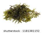algae isolated on white | Shutterstock . vector #1181381152