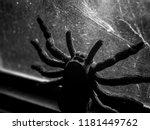 Black Huge Spider Tarantula...