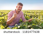 young farmer in filed examining ... | Shutterstock . vector #1181477638