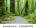 walking route  in the temperate ...   Shutterstock . vector #1181605192