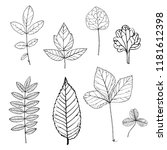 vector drawing leaves of wild... | Shutterstock .eps vector #1181612398