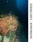 deep underwater world  | Shutterstock . vector #1181700322