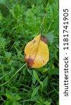 Single Fall Yellow Leaf On...