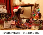 Stock photo dog and cat celebrate christmas together with gifts and christmas lights 1181852182