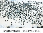 colony of penguins in the snow... | Shutterstock . vector #1181910118