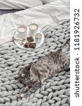 breakfast in bed. grey cute cat ... | Shutterstock . vector #1181926732