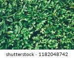 background and green shrubs. | Shutterstock . vector #1182048742