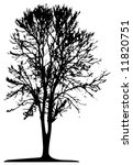 tree  vector  | Shutterstock .eps vector #11820751