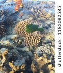live coral at low tide on the...