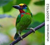 beautiful green bird  red... | Shutterstock . vector #1182097012
