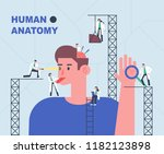 small sized doctors looking at... | Shutterstock .eps vector #1182123898