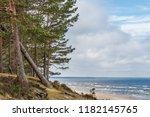 Forest Meets Beach Baltic Sea - Fine Art prints
