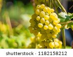arge berries of white grapes...   Shutterstock . vector #1182158212