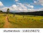 green field under blue sky with ... | Shutterstock . vector #1182158272