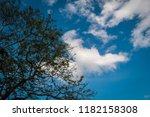 tree under cloudy blue sky | Shutterstock . vector #1182158308