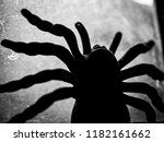 Close Up Silhouette Of Black...