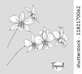 white orchid flower. tropical... | Shutterstock .eps vector #1182170062