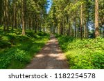 footpath through the forest ... | Shutterstock . vector #1182254578