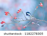 coal tit on snowy wild red rose ... | Shutterstock . vector #1182278305