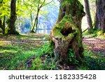 beautiful park scene  | Shutterstock . vector #1182335428
