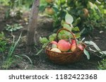 basket with freshly picked... | Shutterstock . vector #1182422368