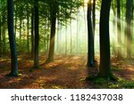 beautiful sunrise in forest | Shutterstock . vector #1182437038
