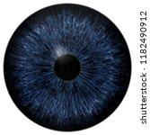 Dark Scary Blue Eyeball  Animal ...