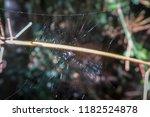 spider web with little spider... | Shutterstock . vector #1182524878