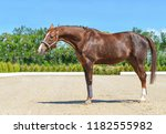 beautiful horse  blue sky and... | Shutterstock . vector #1182555982