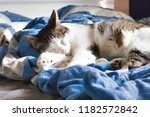 the cat is sleeping on the bed...   Shutterstock . vector #1182572842