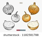 hand drawn onion. template for... | Shutterstock .eps vector #1182581788