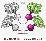 hand drawn beetroot. template... | Shutterstock .eps vector #1182586975