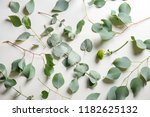 eucalyptus branches with fresh... | Shutterstock . vector #1182625132