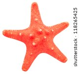 sea star isolated on white | Shutterstock . vector #118265425