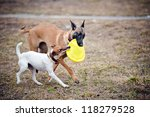 Stock photo two dogs play with toy disc together 118279528