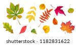 collection of autumn leafs of... | Shutterstock .eps vector #1182831622