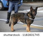 police dog called canine unit k ...   Shutterstock . vector #1182831745