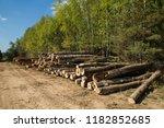the felled trees folded near... | Shutterstock . vector #1182852685