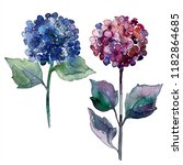 watercolor blue and violet... | Shutterstock . vector #1182864685