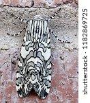 painted tiger moth arachnis...   Shutterstock . vector #1182869725
