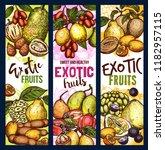 exotic fruit sketch sweet food. ... | Shutterstock .eps vector #1182957115