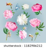 a picturesque peony flower.... | Shutterstock .eps vector #1182986212