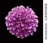 purple flower work path on... | Shutterstock . vector #1183000858