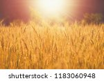 farm wheat field | Shutterstock . vector #1183060948